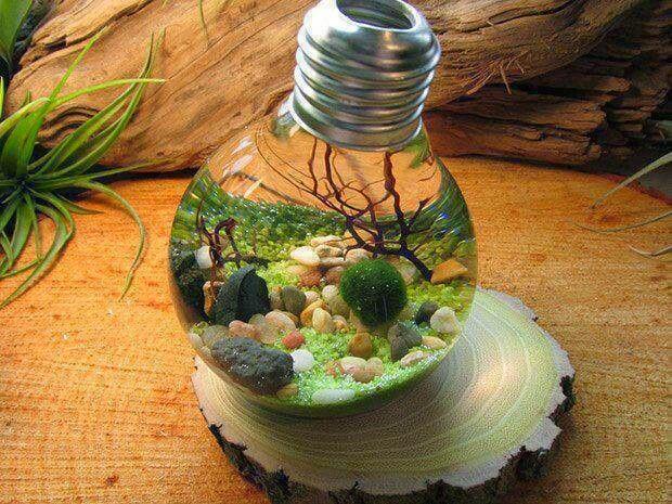 Ecosphere innerirdisch und au erirdisch die aliens for Welche teichfische fressen algen