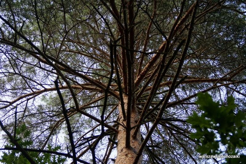 Warszawa Wola park las alejki tory kolej Trasa Toruńska drzewa zieleń plac zabaw