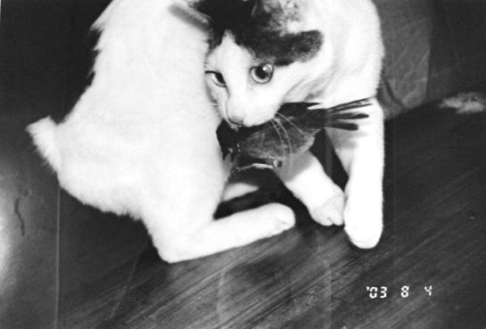 Nobuyoshi Araki Cat Nobuyoshi Araki Chiro 14