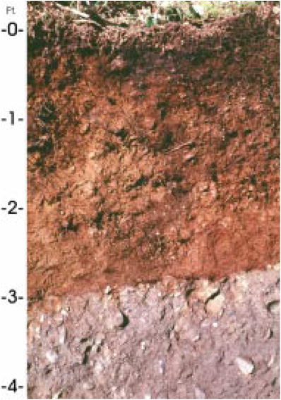 Forest Soil Profile Picture of a soil profile Forest Soil Profile