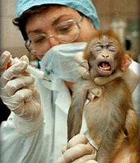 How are animals being used in scientific research?