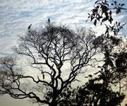 Brazil Pantanal Conservation Area