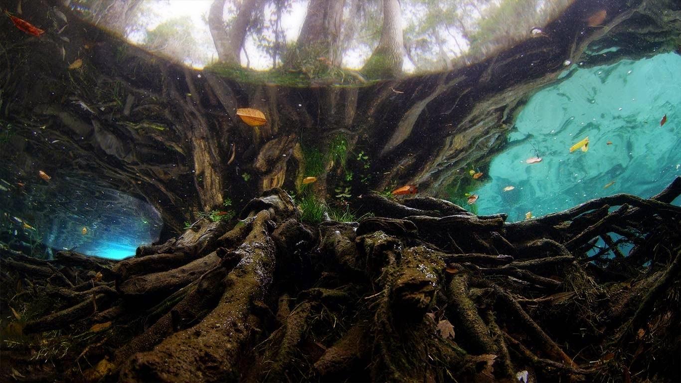 Three Sisters Springs, Manatee Sanctuary, Florida (© Mammoth HD) 271