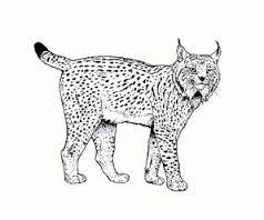 Haute Patrouille du Lynx