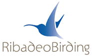 Turismo ornitológico en Ribadeo