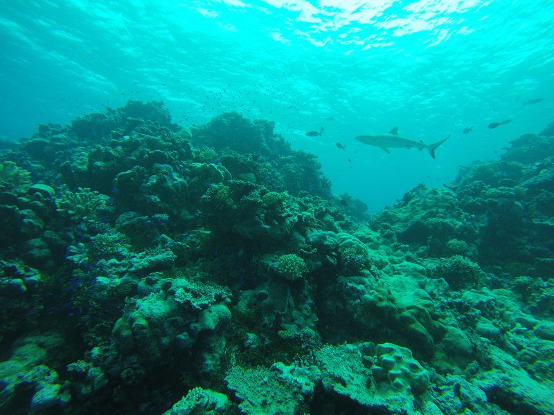 ビキニ環礁の画像 p1_11
