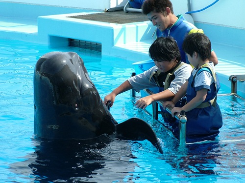 "compaxworld: ""Marine World - Uminonakamichi"