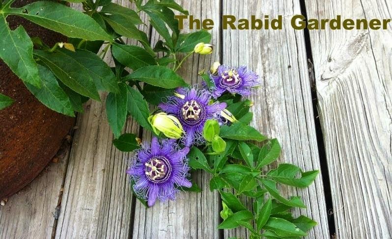 The Rabid Gardener
