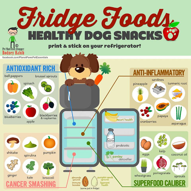 Healthy Dogs, guide: Diet and, nutrition, tips