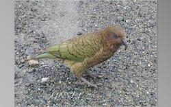 ニュージーランド(New Zealand)