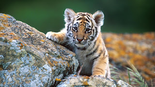 Baby Animal Wallpaper