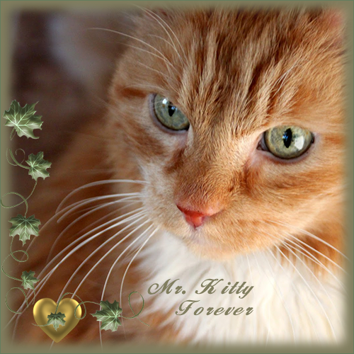 RIP MR. KITTY