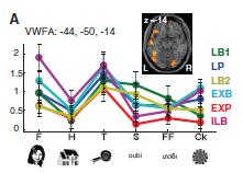 Dehaene 2010 la réponse de l'aire de la forme visuelle des mots VWFA aux différents types de stimuli