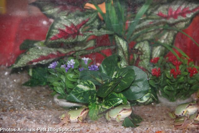 http://4.bp.blogspot.com/-kNJG82etV2o/TaBL3RZYLJI/AAAAAAAAAm0/1G34_bsW-1g/s1600/green%2Bfrog_0004.jpg