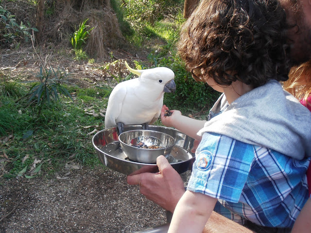 Feeding the birds at Grants on Sherbrook