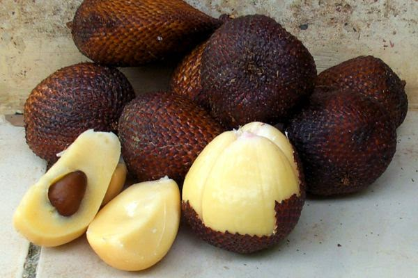 [Fruit] Health Benefits of salak for diet and eye (Salacca, Salacca edulis)