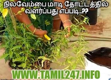 Nilavembau maadi thottathil valarppadhu eppadi, Vivasayam, thottakkalai, mooligai sedi valarpu murai, veettu thottam, gardening in tamil, maadi thottam tips in tamil