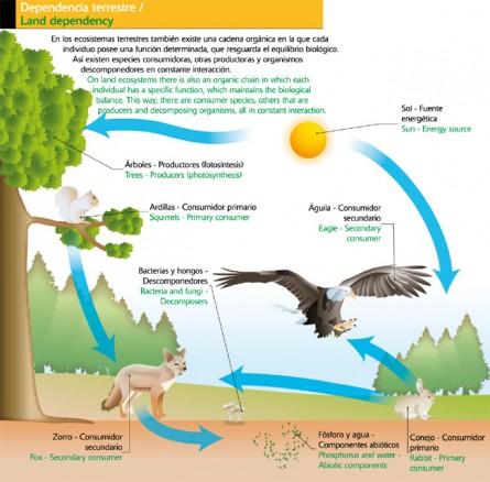 Ecosistemas tipos de ecosistemas for Que elementos conforman el suelo