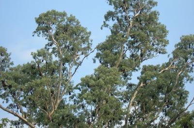 Bats on a tree