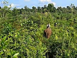 Keindahan Taman Nasional Tesso Nilo