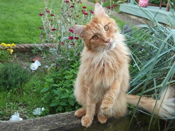 Piante velenose per i gatti la compagnia dei maine coon for Piante velenose per i gatti