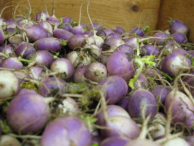 baby turnips:  Hollygrove Market & Farm, NOLA