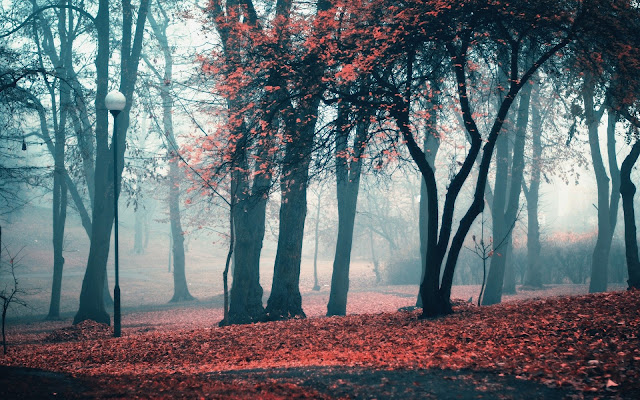 Paisajes de Caminos entre Bosque