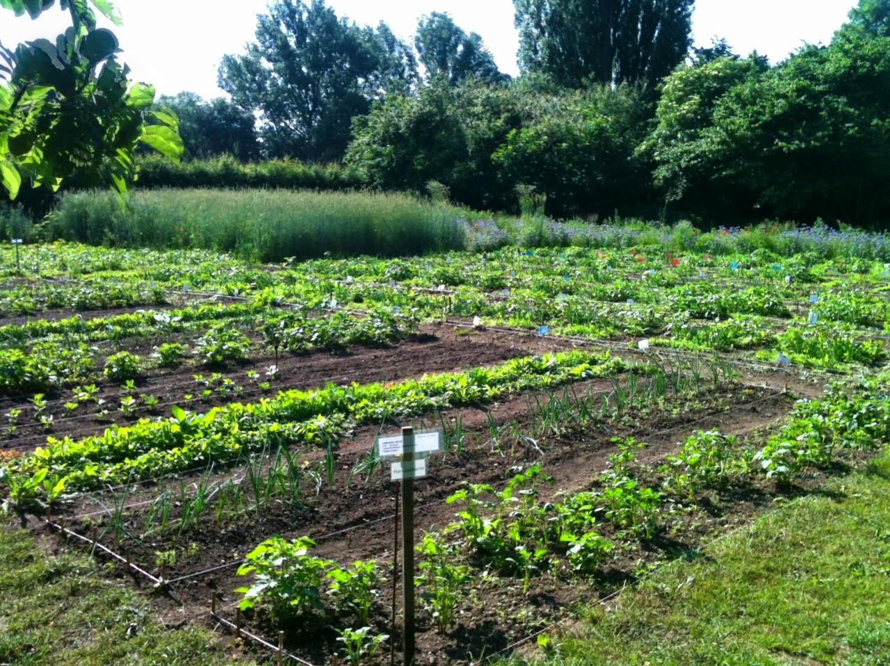 Kitchen Garden Farm Chop Wood Carry Water Plant Seeds Copenhagens 3 Hectares School