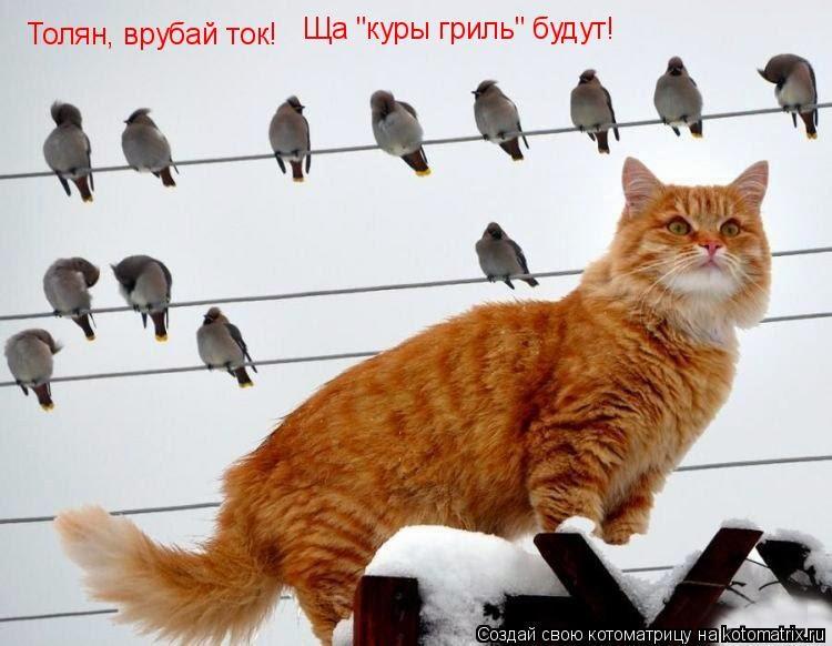Коты случаются 14