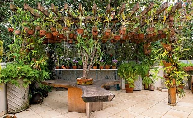 Vivian Design Meu jardim de Orquídeas