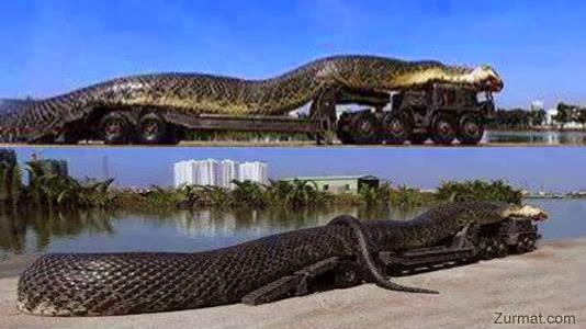 gambar ular - gambar ular raksasa