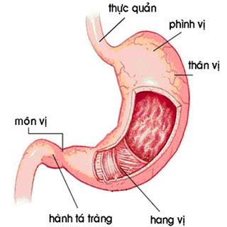 Triệu chứng bệnh viêm dạ dày