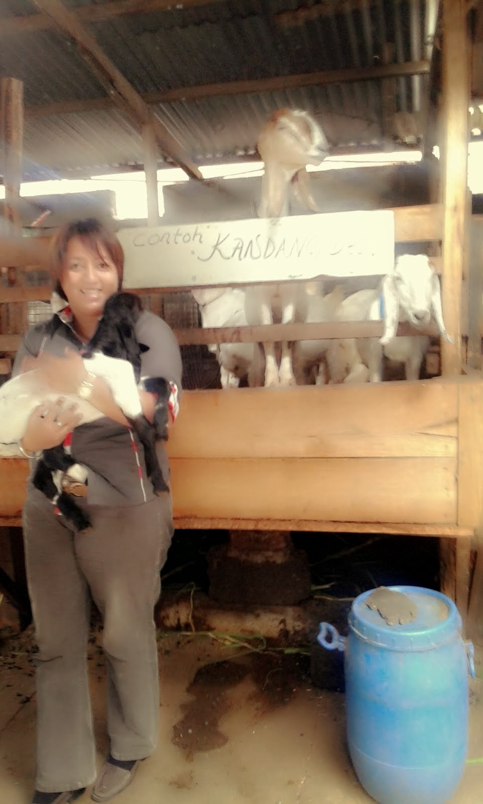 Survei Kambing untuk Persiapan Demplot tgl 20 Februari 2014