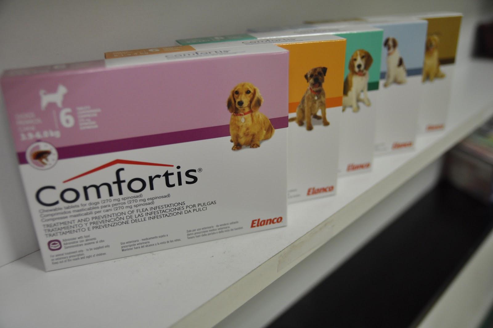 Clinica veterinaria aparici feal problemas con las - Matar pulgas en casa ...