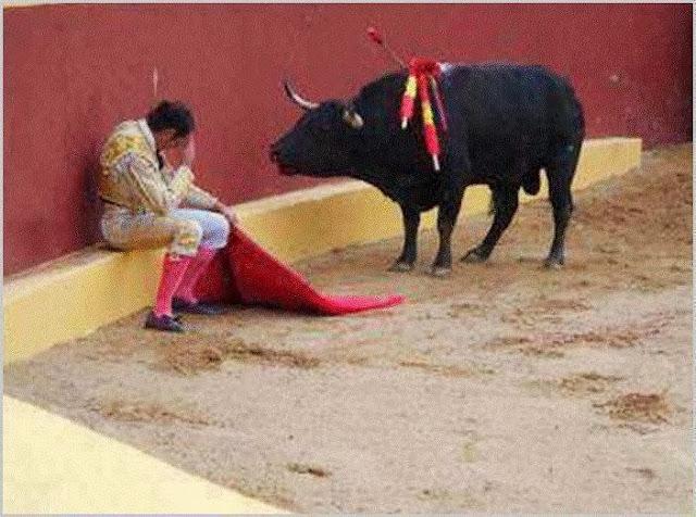 Stop bull fighting