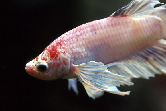 Pairi Daiza aquarium