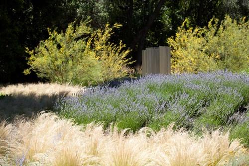 La leyenda urbana del jard n sin mantenimiento jardines - Jardines con poco mantenimiento ...