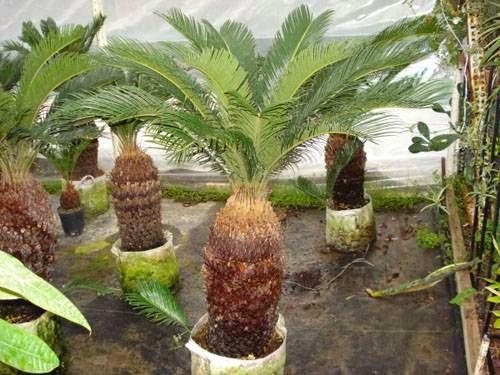 http://tukangtamanqu.blogspot.com/2014/12/jual-tanaman-hias-untuk-taman-rumah.html