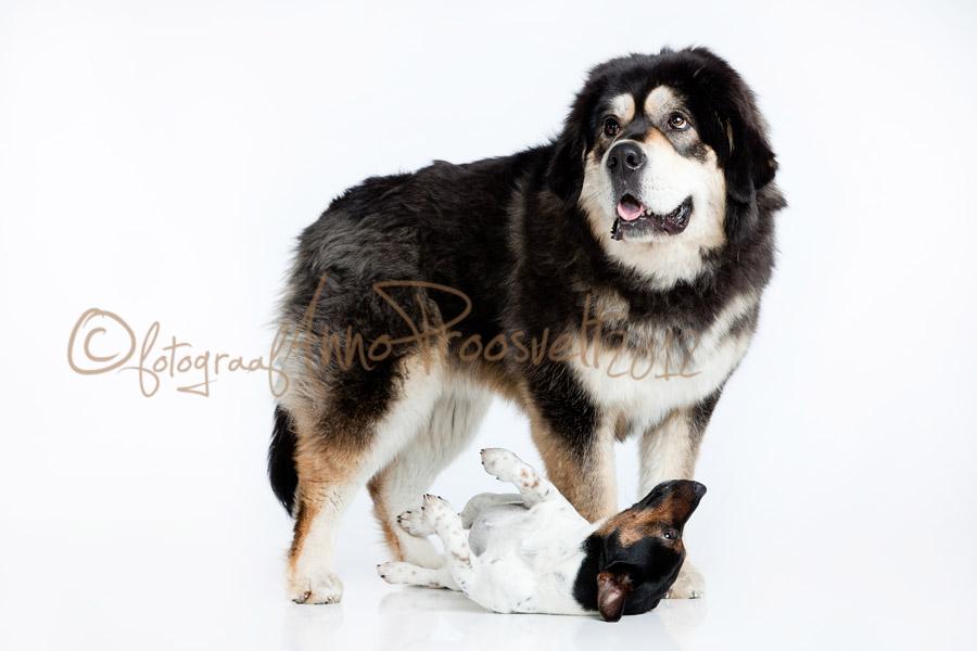 lemmikloomaga-pildistamas-koerad