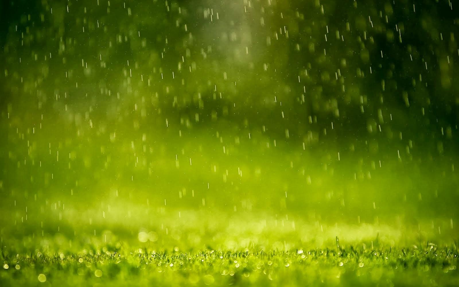 anime rain green wallpaper - photo #29