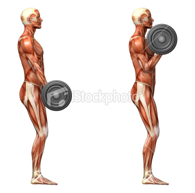 Randy's Weight Room: Barbell Curl