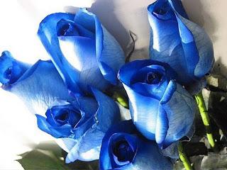 jual Bunga Mawar Biru di jakarta
