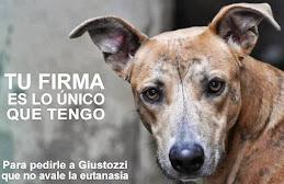 NO a la eutanasia