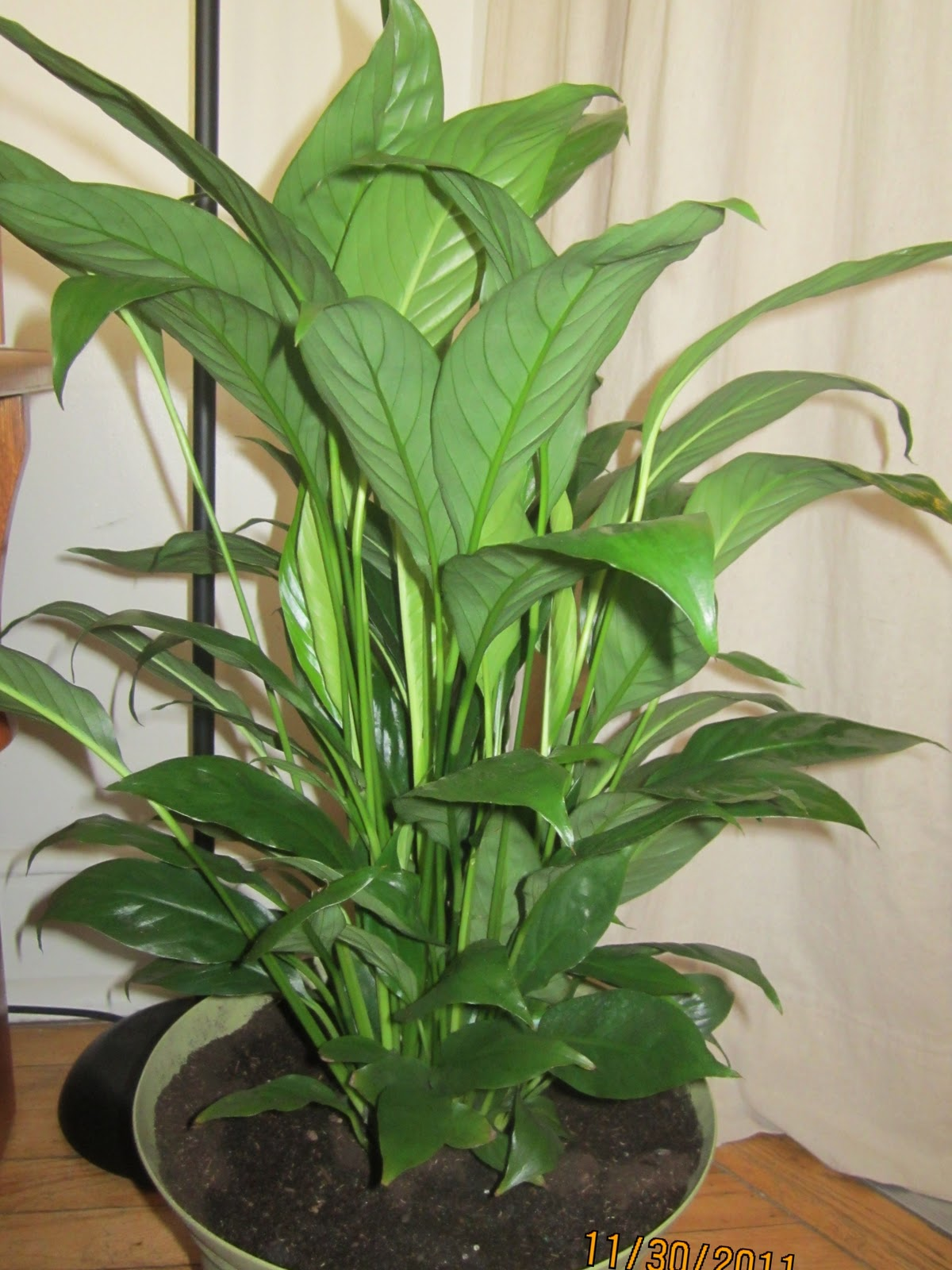 Homemade and colorful new and old houseplants - Colorful indoor plants ...