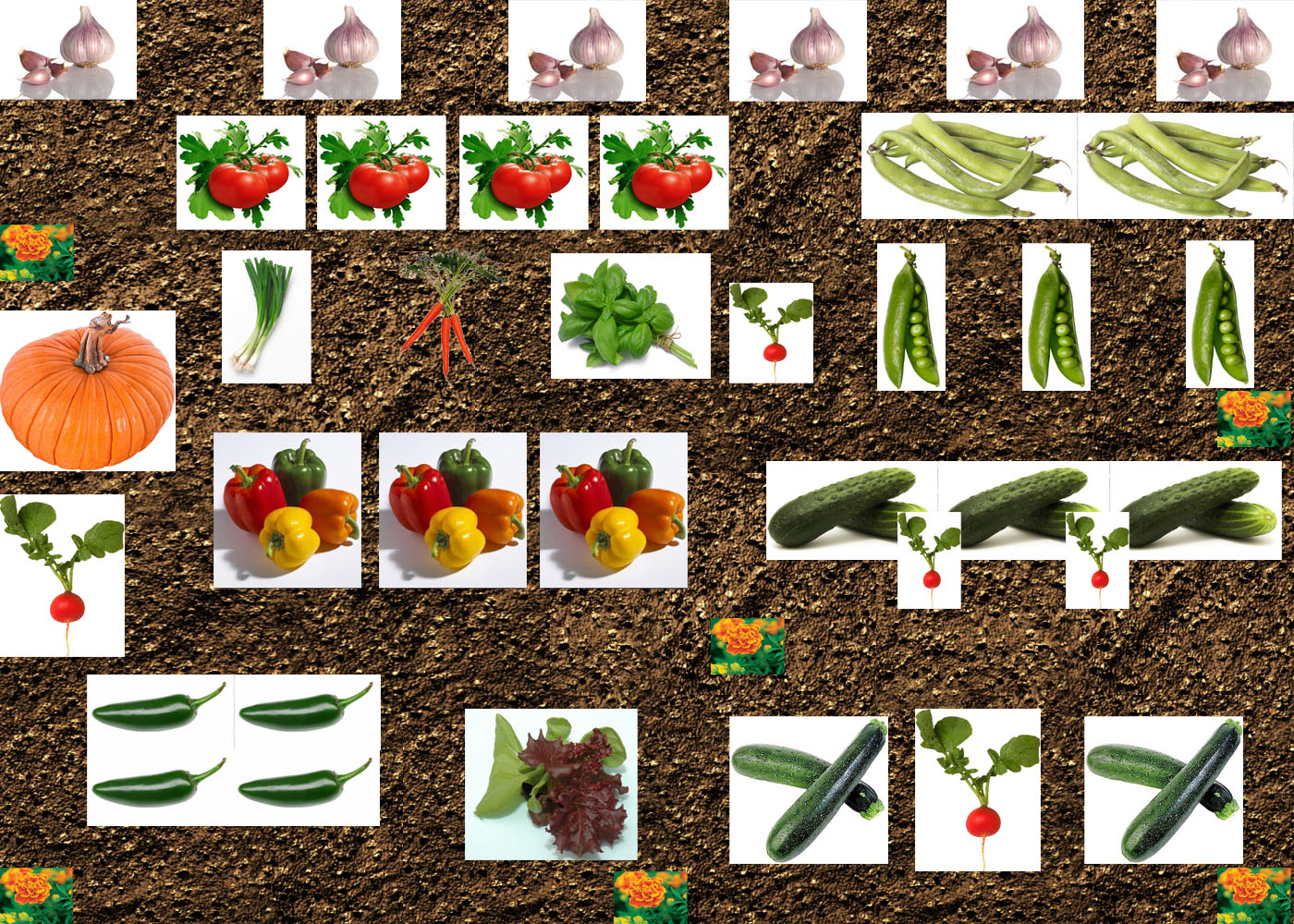 Companion garden layout companion planting chart map and for Vegetable garden layout