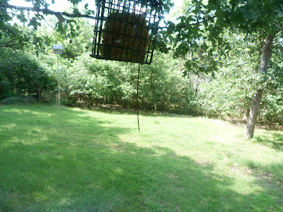 backyard sans bird feeder