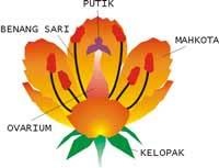 Musuh Alami Predator Bagian Bagian Bunga Beserta Gambar Dan Keterangannya