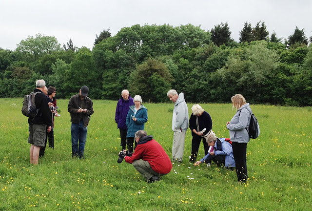 Wildflower walk in Jubilee Country Park, 2 June 2012