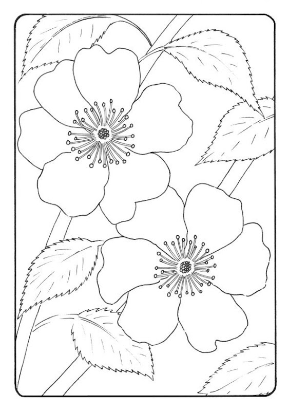 Beautiful Flowers Coloring Page For Kids title=