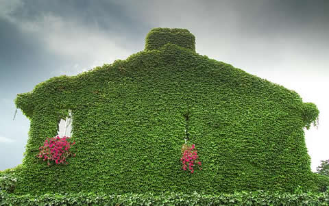 Jardin vertical c mo asegurarnos un buen sistema de riego for Materas para jardines verticales